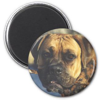 Boxer:  Big Stick Magnet