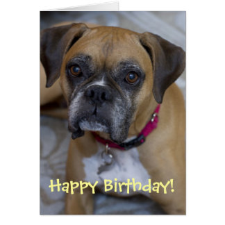 Boxer Birthday Card by Focus for a Cause