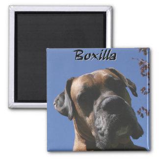 Boxer:  Boxilla Magnet