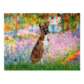Boxer (br5) - Garden Postcard