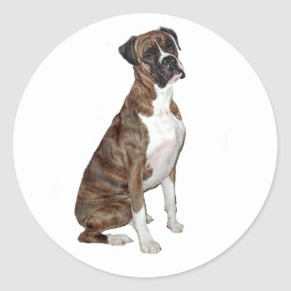 Boxer - brindle (natural ears) classic round sticker