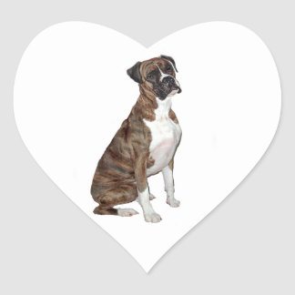 Boxer - brindle (natural ears) heart sticker