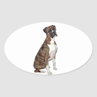 Boxer - brindle (natural ears) oval sticker