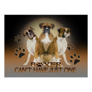 Boxer Cant's have just one Poster