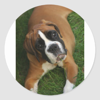 boxer-cute.png classic round sticker