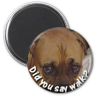 Boxer: Did you say walk? Magnet