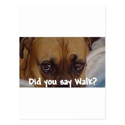 Boxer: Did you say walk? Post Card