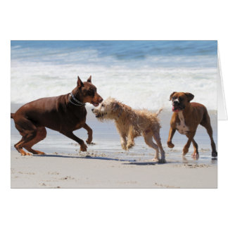 Boxer Doberman - Play Date at the Beach Card