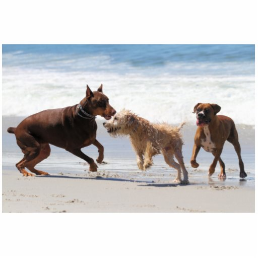 Boxer Doberman - Play Date at the Beach Cut Outs