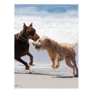 Boxer Doberman - Play Date at the Beach Postcard