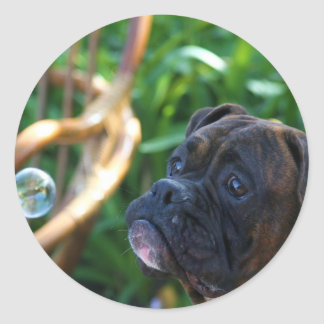 Boxer dog and bubbles stickers