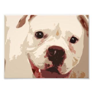 Boxer Dog Art Photo Art