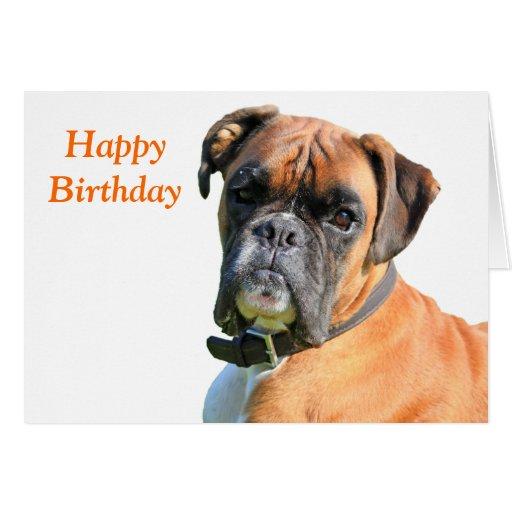 Boxer dog beautiful photo happy birthday card