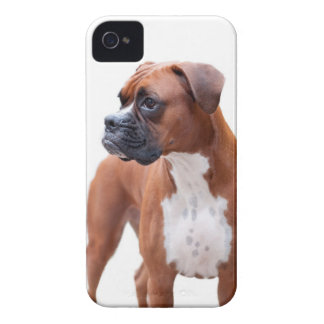Boxer dog Blackberry Bold case