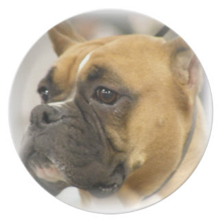 Boxer Dog Face Plate
