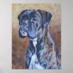 Boxer Dog Fine Art Poster