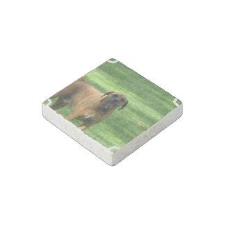 Boxer Dog Stone Magnet