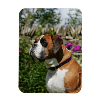 Boxer Dog in the Flowers Magnet