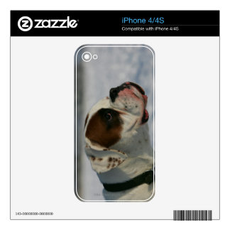 Boxer Dog in the Snow Skin For The iPhone 4