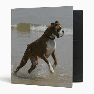 Boxer Dog in Water Binder