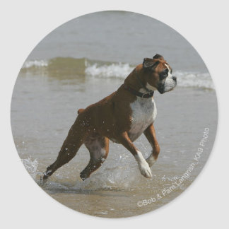 Boxer Dog in Water Classic Round Sticker
