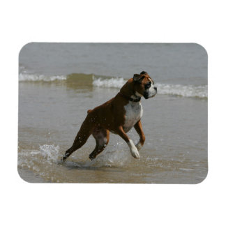 Boxer Dog in Water Magnet