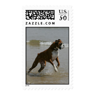Boxer Dog in Water Postage