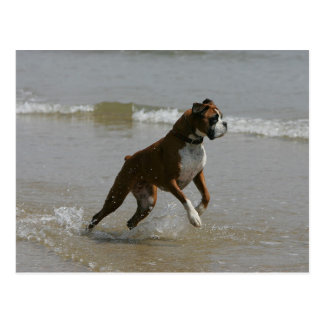 Boxer Dog in Water Post Cards
