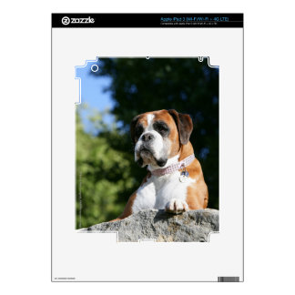 Boxer Dog Laying on a Rock iPad 3 Decal