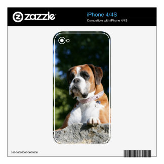 Boxer Dog Laying on a Rock iPhone 4S Decal