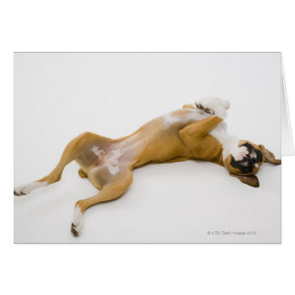 Boxer dog laying on her back on the floor card
