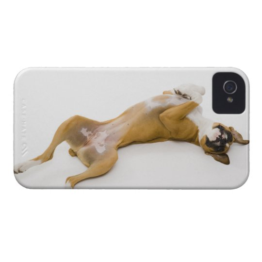 Boxer dog laying on her back on the floor iPhone 4 cover