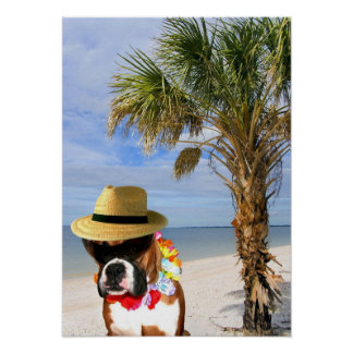 Boxer dog on the beach poster