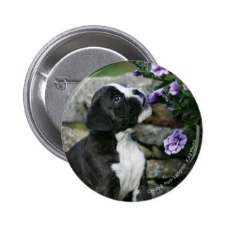 Boxer Dog Panting 2 Inch Round Button