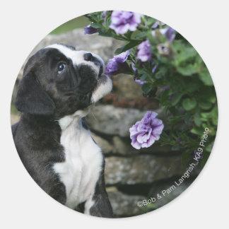Boxer Dog Panting Classic Round Sticker
