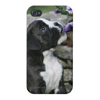 Boxer Dog Panting Covers For iPhone 4