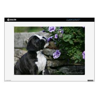 Boxer Dog Panting Decal For Laptop