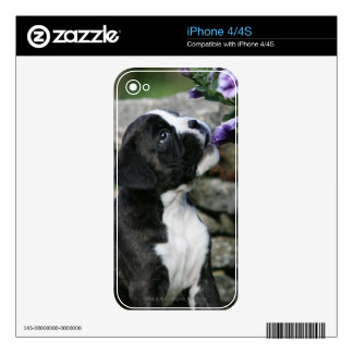 Boxer Dog Panting Skin For The iPhone 4S