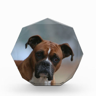 Boxer dog Portrait Paperweight Award