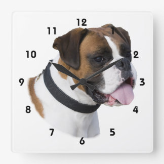 Boxer dog portrait photo square wallclock