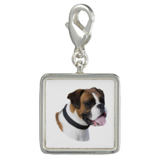 Boxer dog portrait photo photo charm