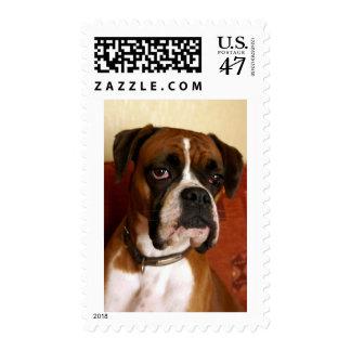 Boxer Dog Postage