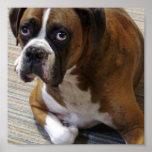 Boxer Dog Poster Print
