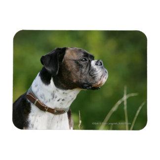 Boxer Dog Profile Magnet