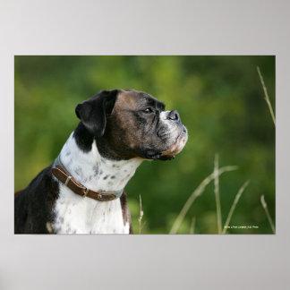 Boxer Dog Profile Print