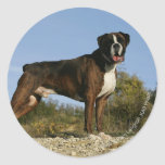 Boxer Dog Show Stance Classic Round Sticker