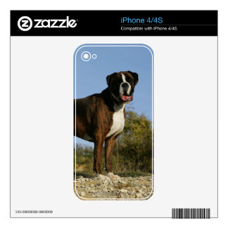 Boxer Dog Show Stance Decal For The iPhone 4S