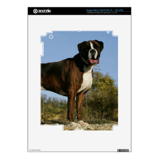 Boxer Dog Show Stance iPad 3 Decal