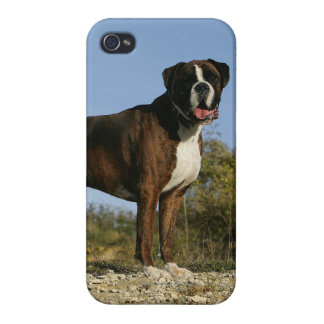 Boxer Dog Show Stance iPhone 4 Cover
