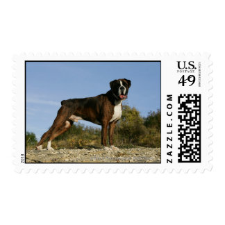 Boxer Dog Show Stance Stamp